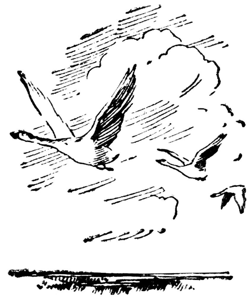 На гусином перелете