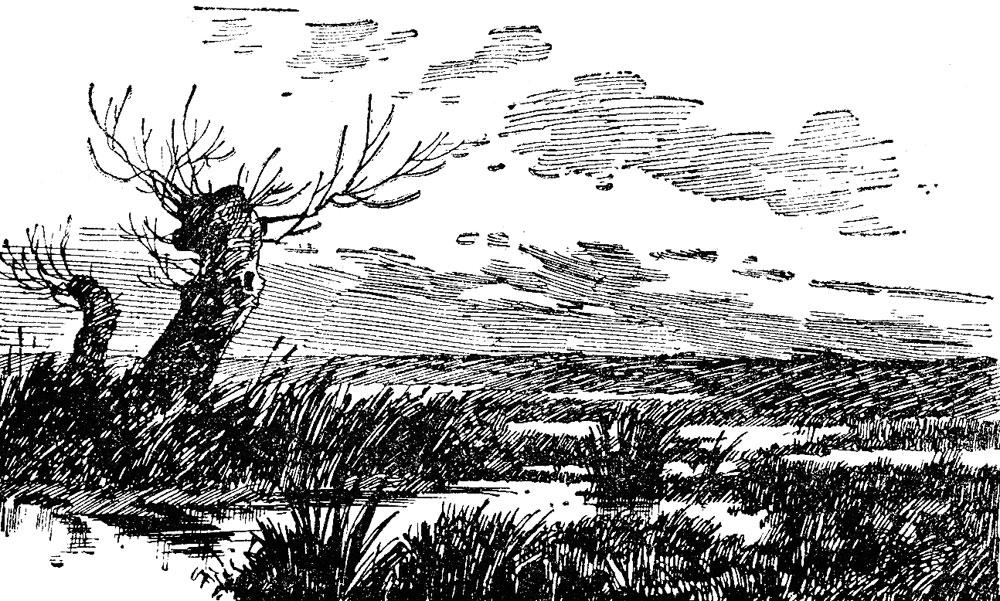 Дупелиные болота