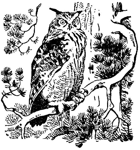 Лесной оборотень (Глава из романа-сказки «Осударева дорога»)