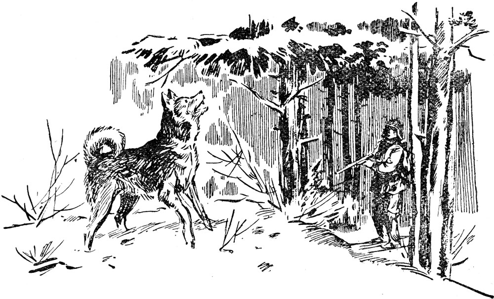 Из дневника охотника