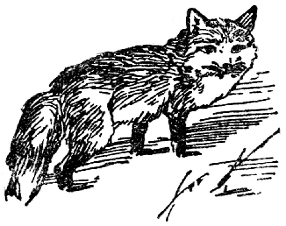 Из повадок лисицы