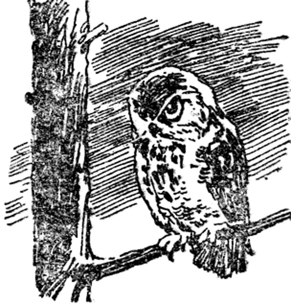 Крылатый заяц