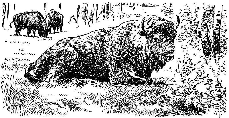 Из истории русской охоты