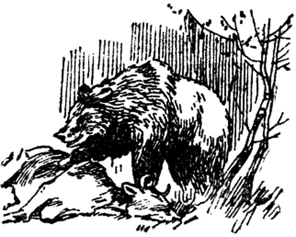 На медведя с лайками