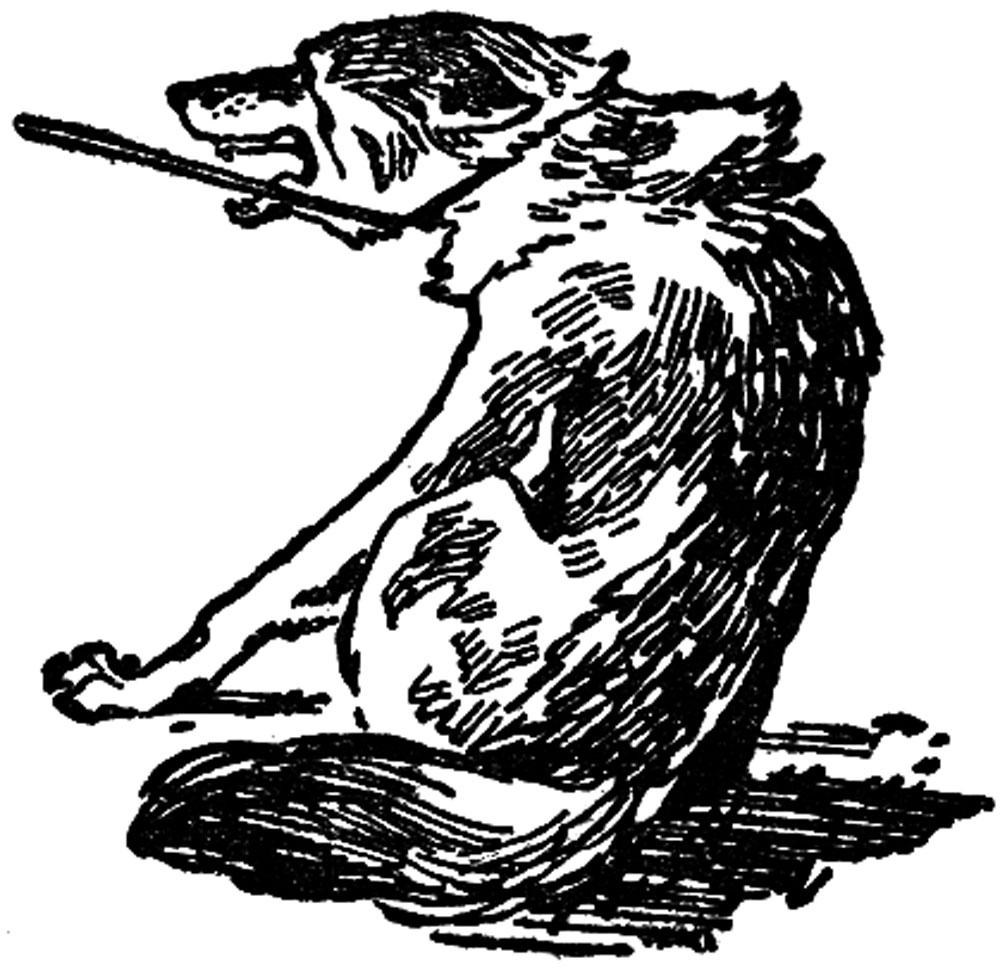 Волк на аркане