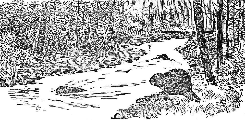 На мещерских озерах