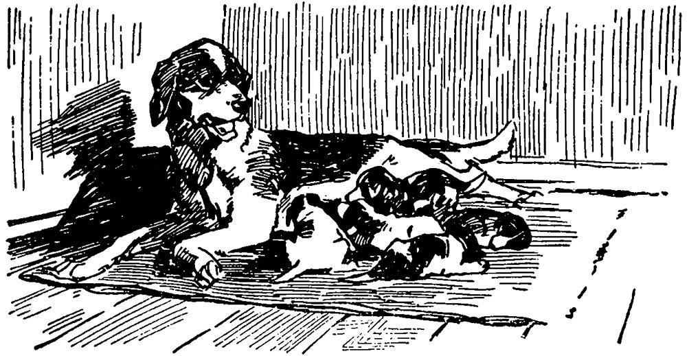 Выбор гончей в щенячьем возрасте
