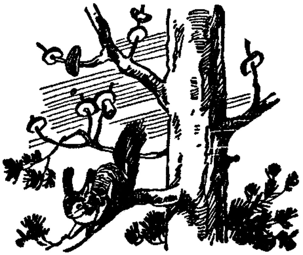 Заметки охотника-следопыта