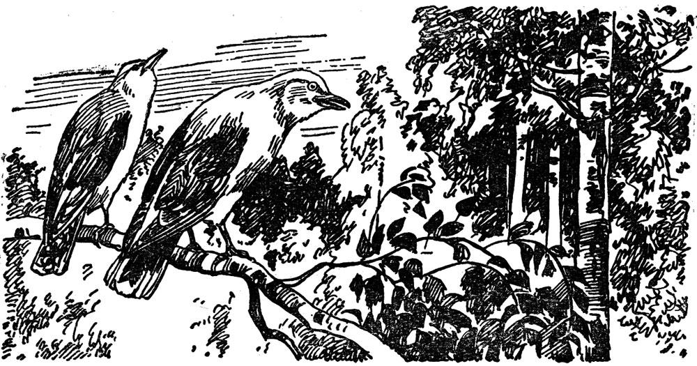 Солнечная птица