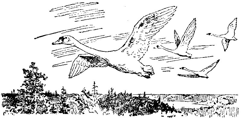 Шепот лебедей