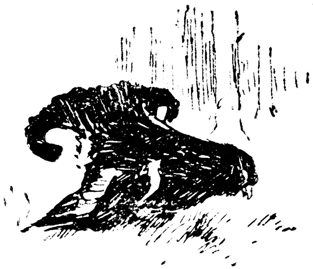 Охотничья смекалка