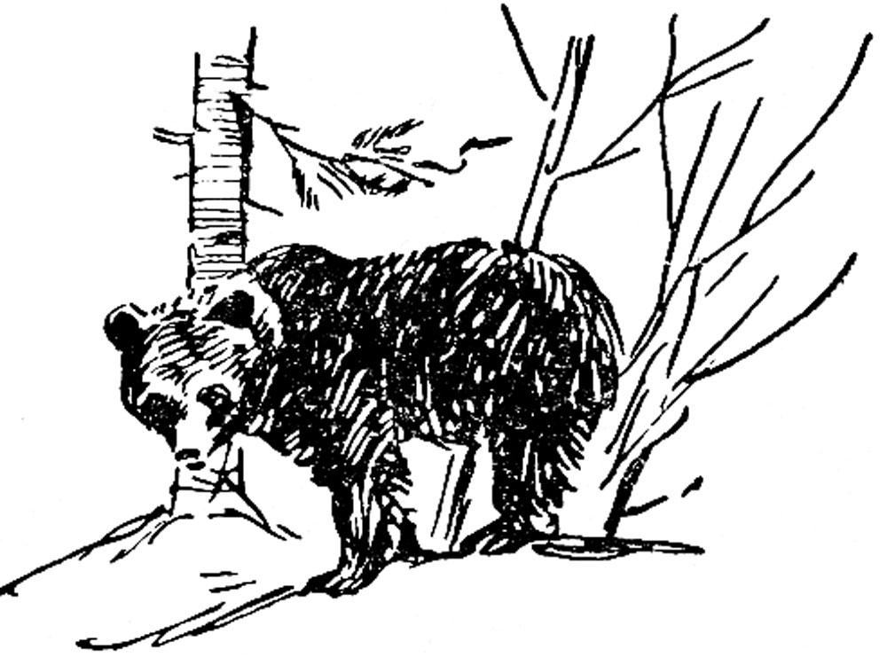 Охота в Архангельской области