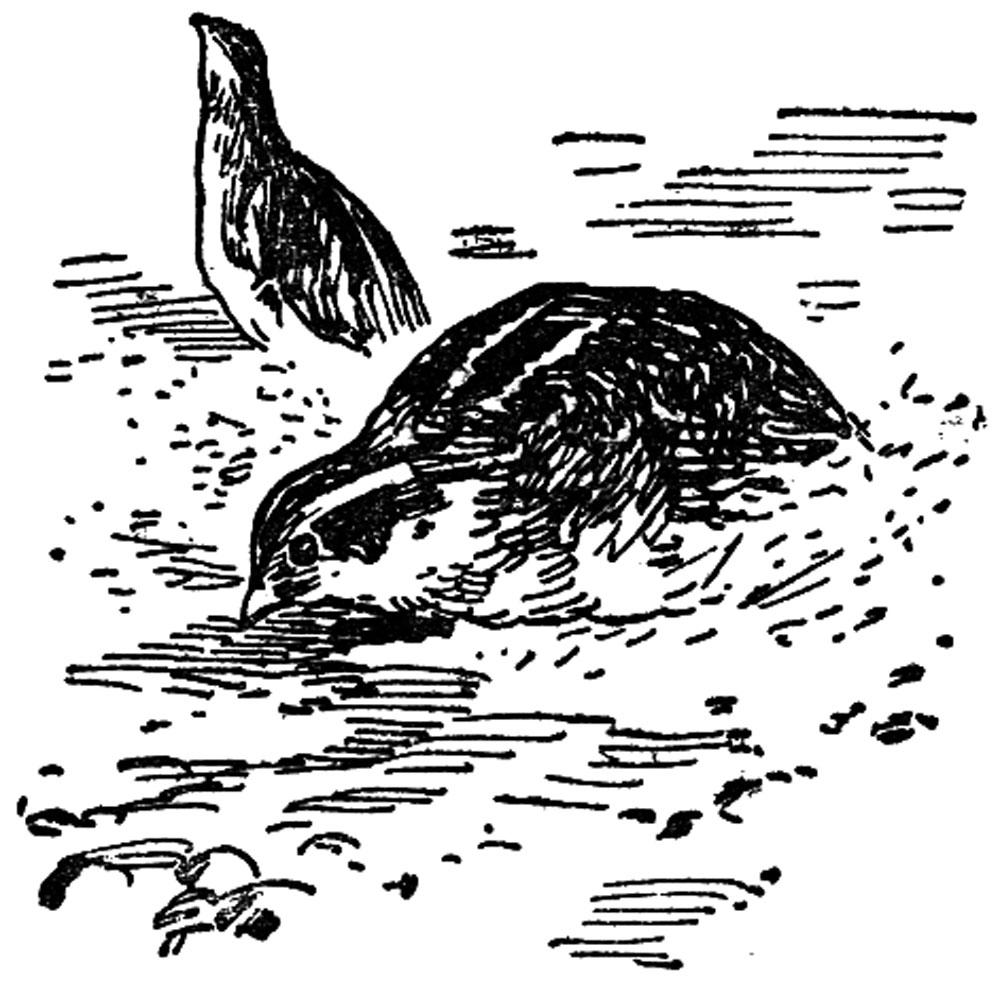 Голубые зайцы