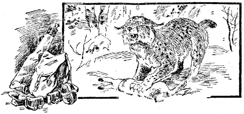 Как волченок превратился в волка