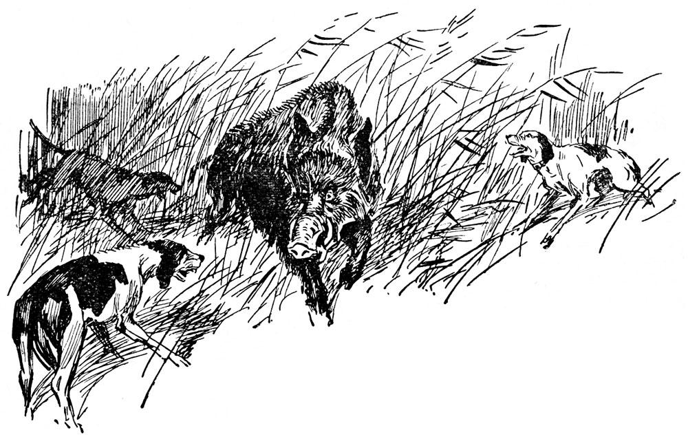 Вышкинские крепи