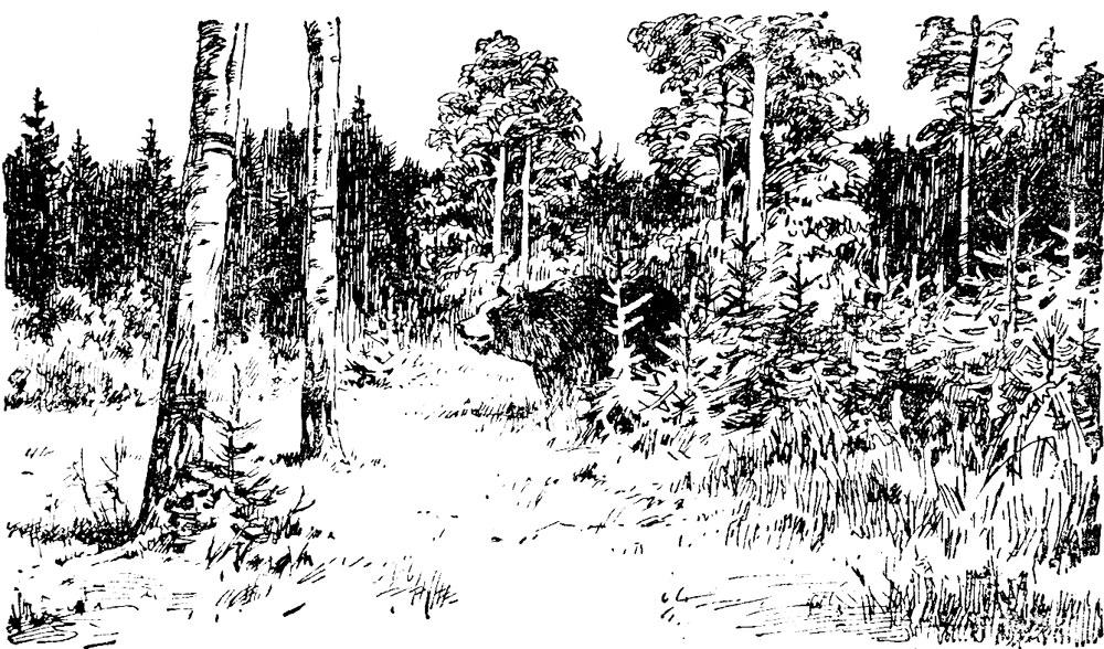 Лесные были