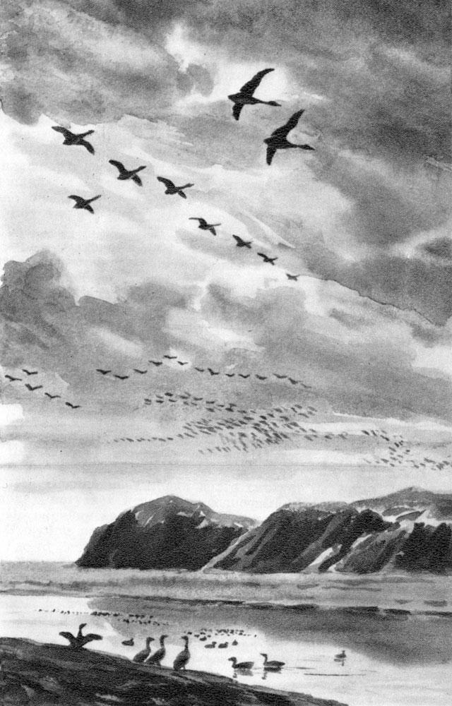 Сбоку от нас летели стал птиц....