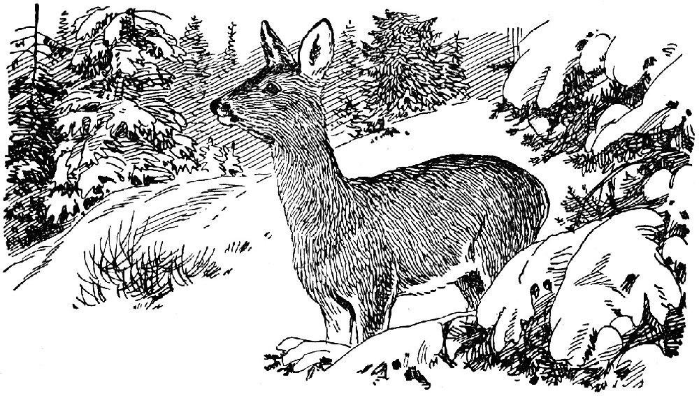 Из тетради охотника-натуралиста