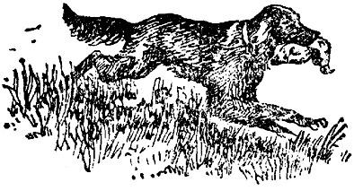 Охотничьи рассказы  (Из книги «История моих животных»)