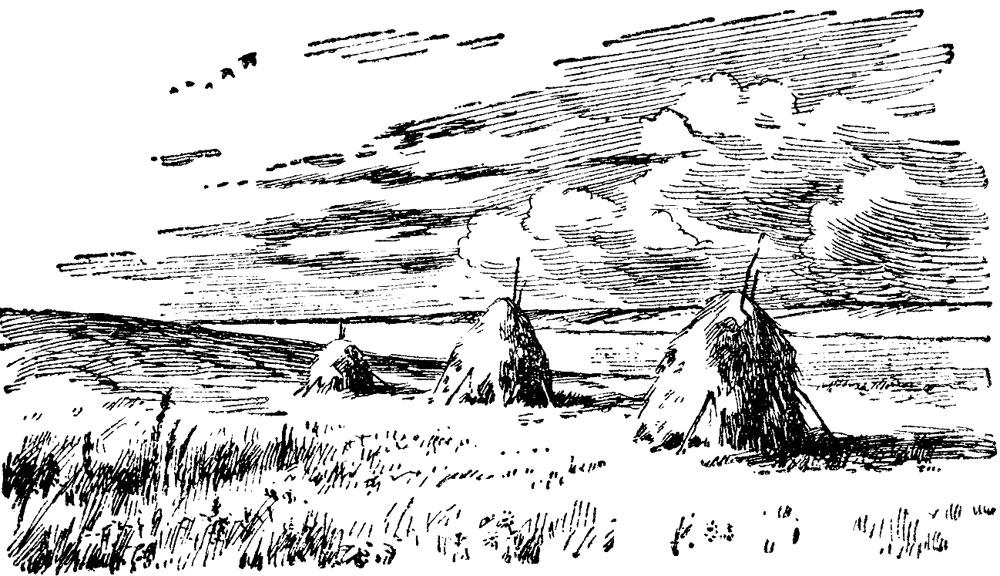 В костромских лугах