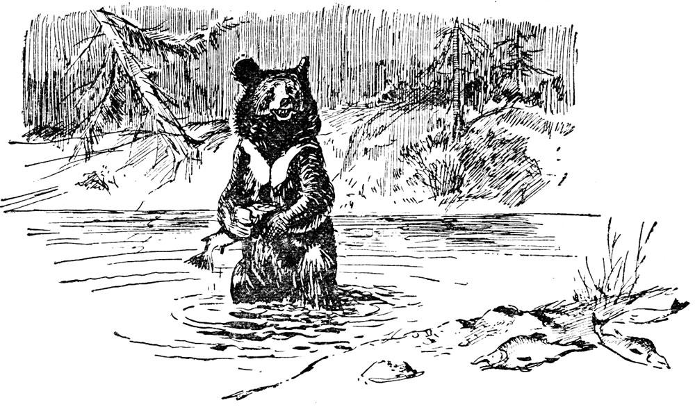 За гималайским медведем