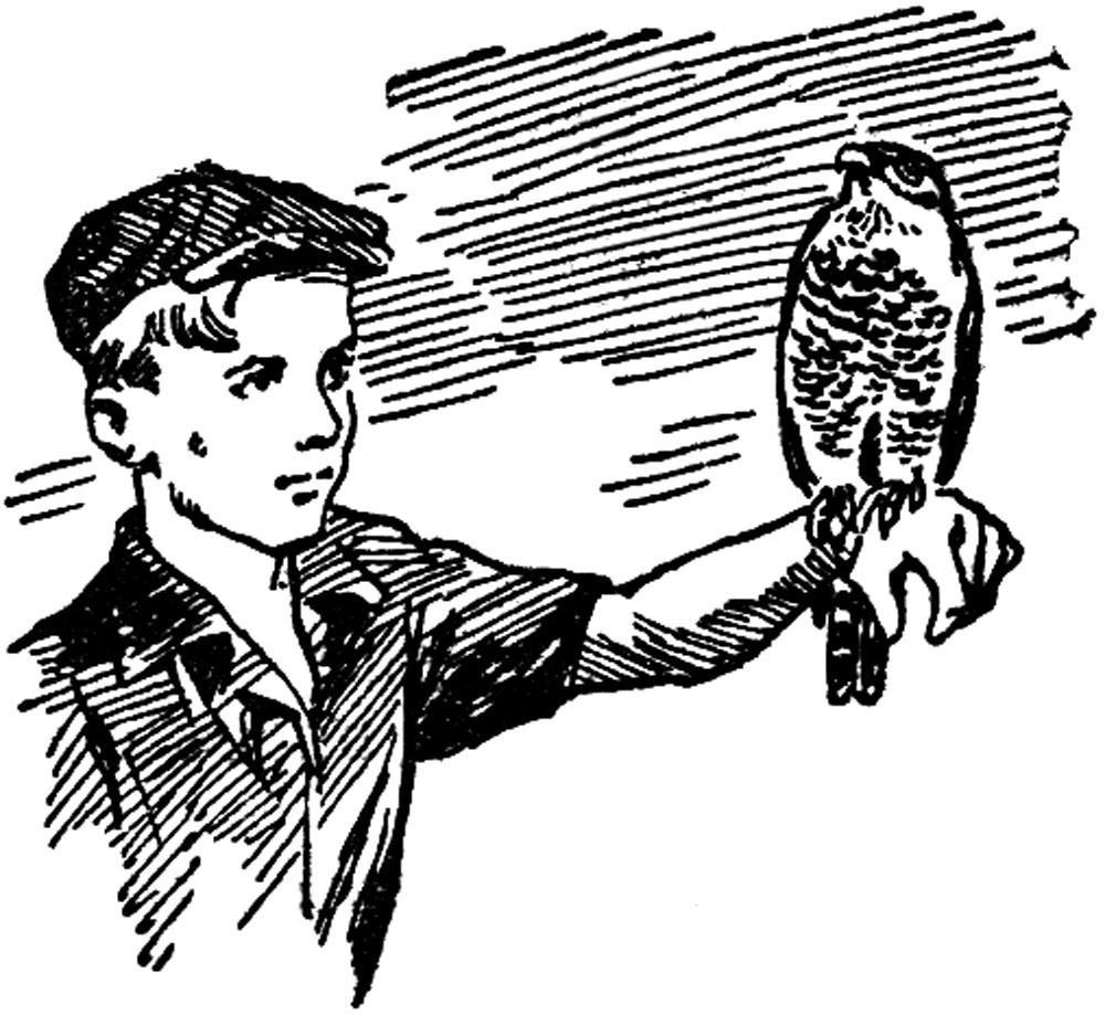 Охота с ястребом