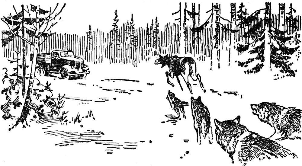 Из наблюдений охотника