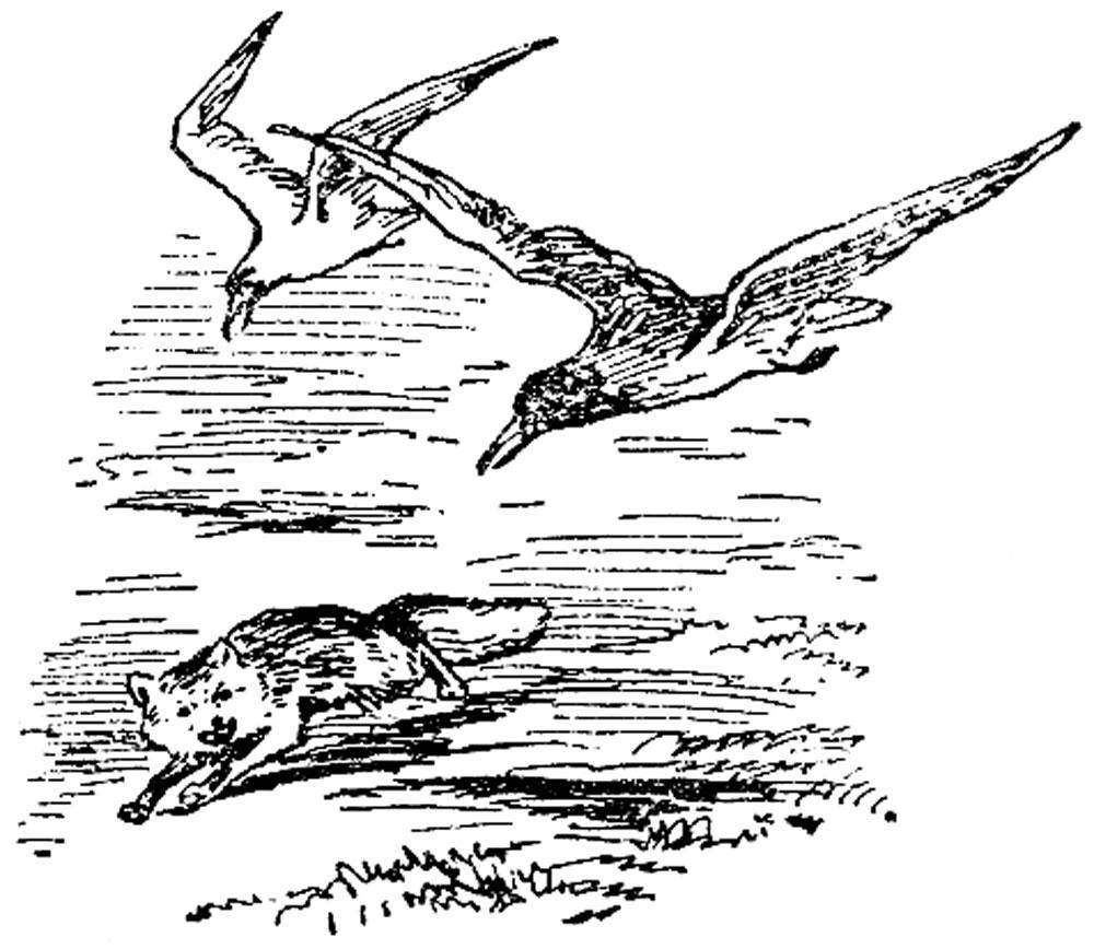 На родине птиц