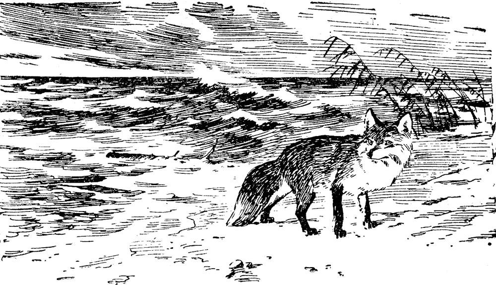 Хищница-лисица