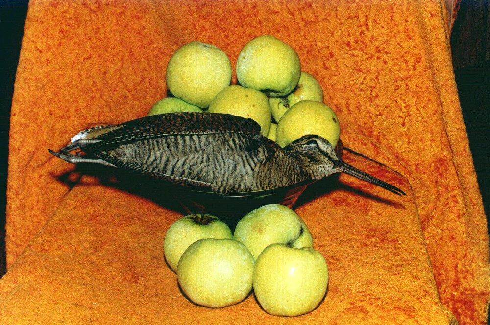 ...объединяя в своём сердце и бунинские «антоновские яблоки» и смирновских «вальдшнепов»