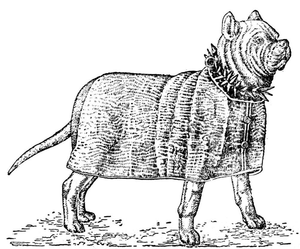 Рис. 5. Древнеримская военная собака