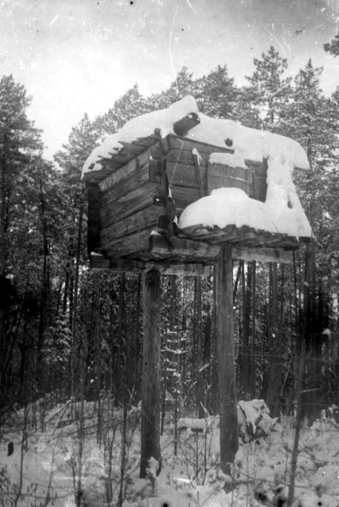 Охотничий лабаз в тайге Западной Сибири. 1969 г.