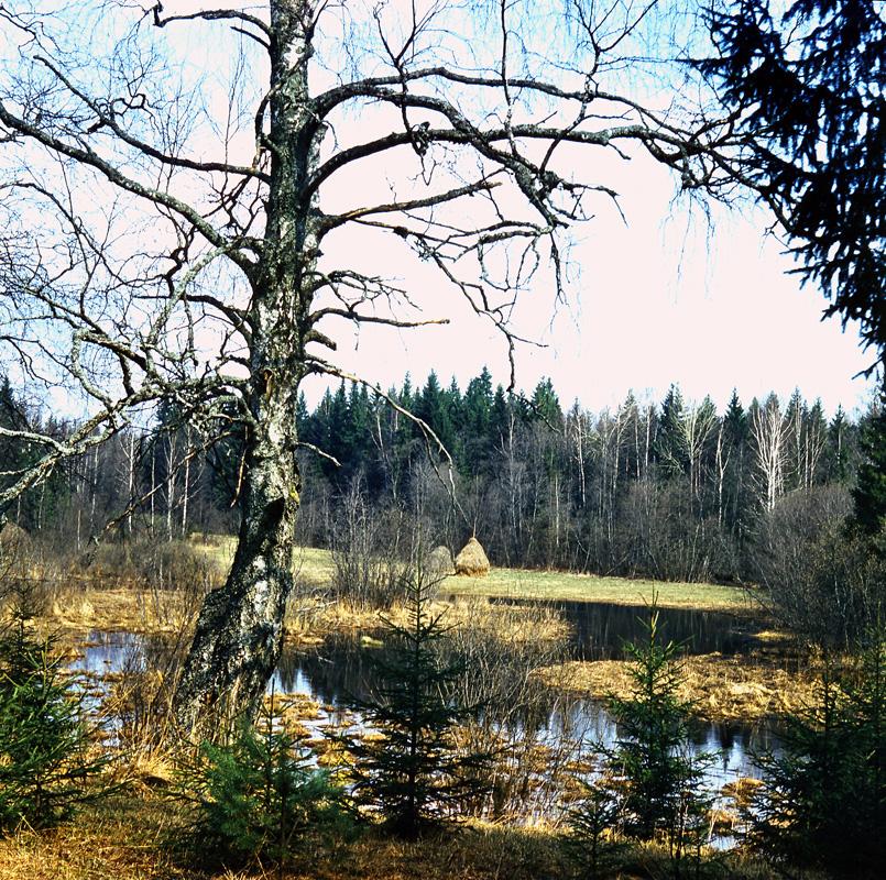 Место впадения Мшаны в Ворчалу