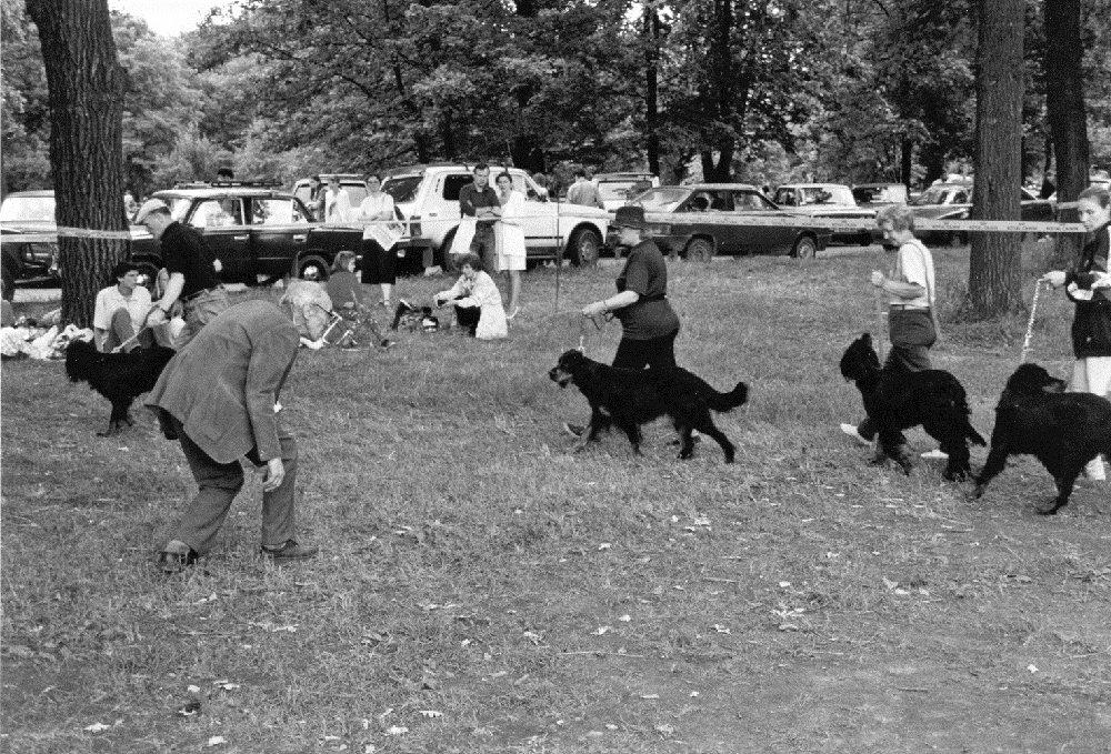Полвека в охотничьем собаководстве