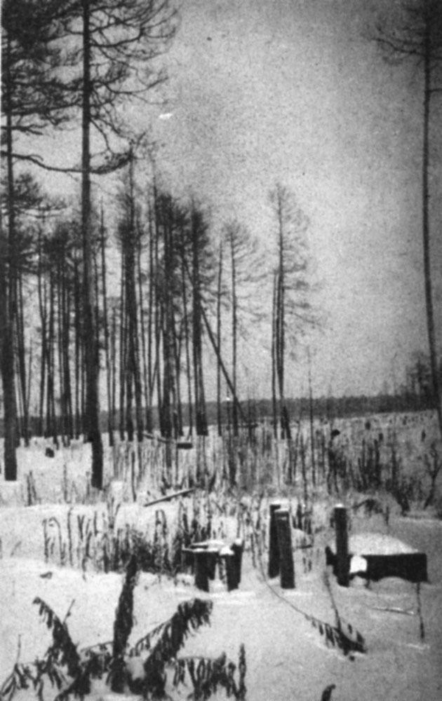 Здесь был Нюрихский кордон заповедника один из опорных пунктов В. В. Раевского. Фото автора 1969 г.
