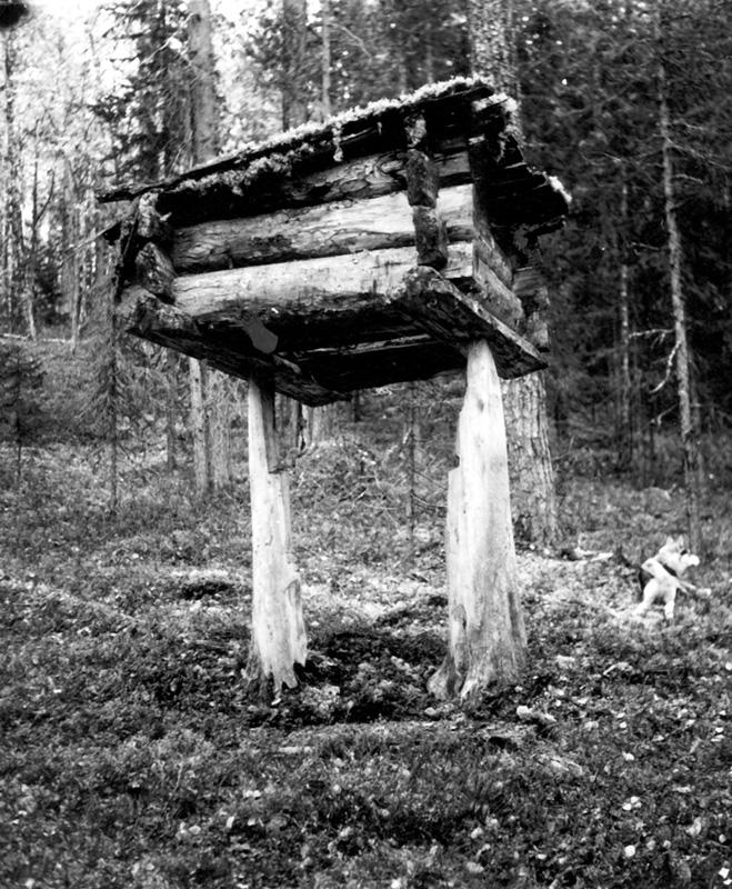 Охотничий лабаз в Приангарье, 1977 г.