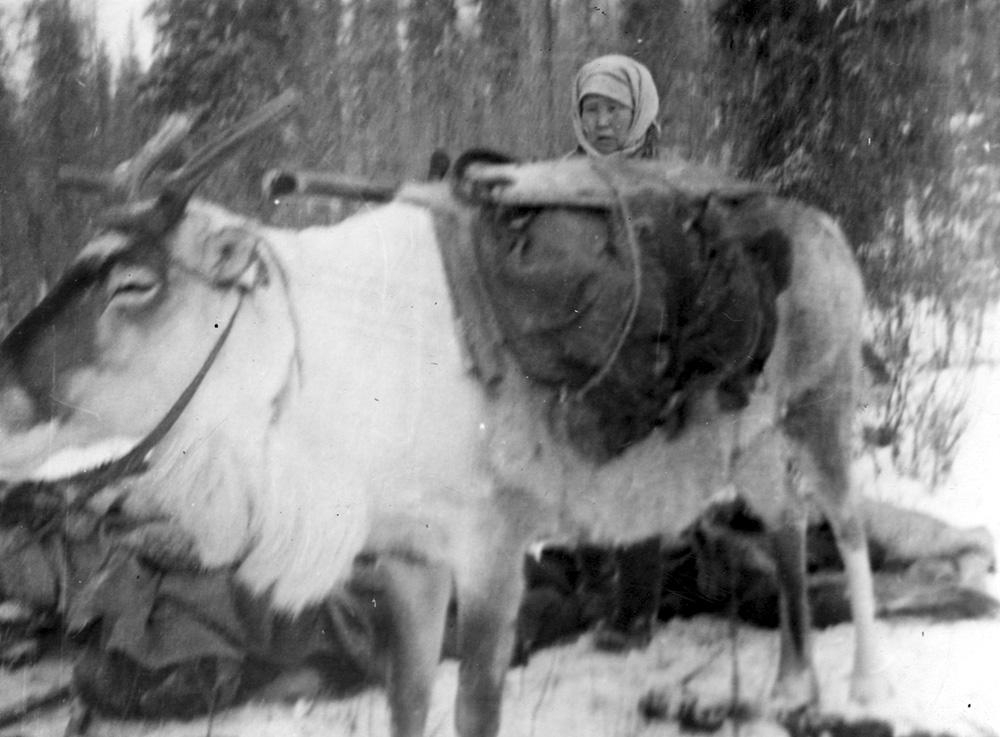 Арина Сафонова с навьюченным оленем. Киренга, 1955 г.