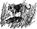 Охотничье хозяйство и охота в Таджикской ССР